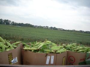 3 of the 5 barrels of corn